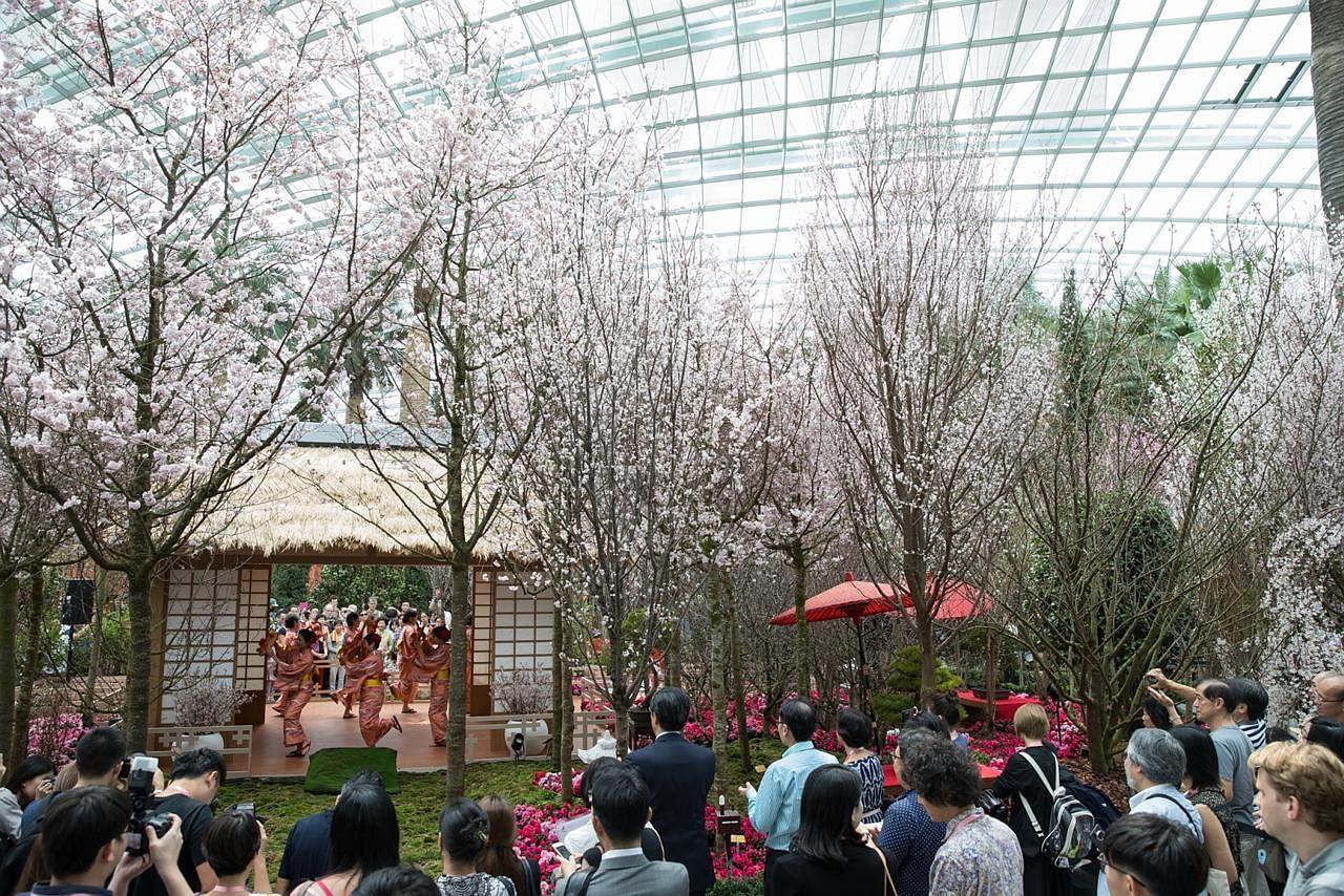 Festival bunga 'Sakura Matsuri' di Taman di Persisiran