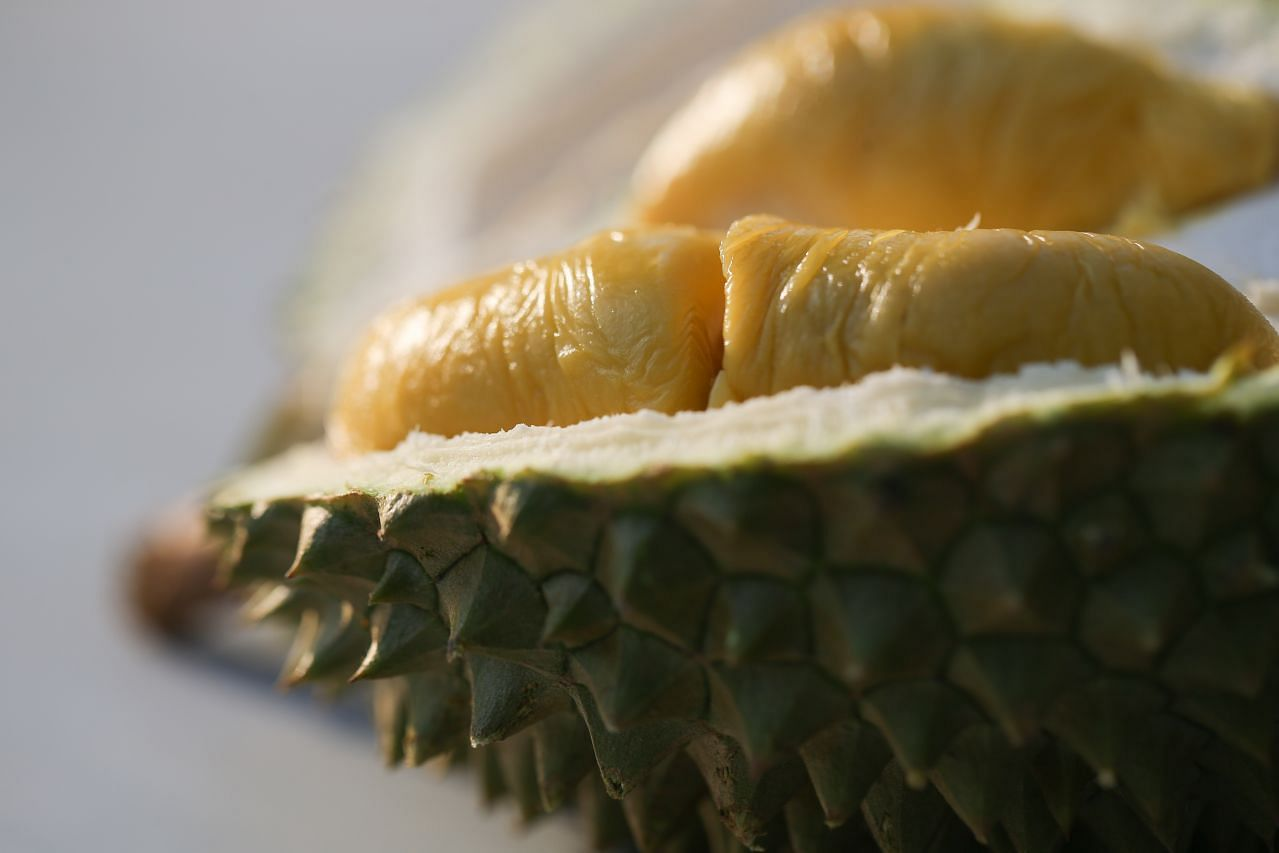 Durian season set to start in May, with peak hitting in June