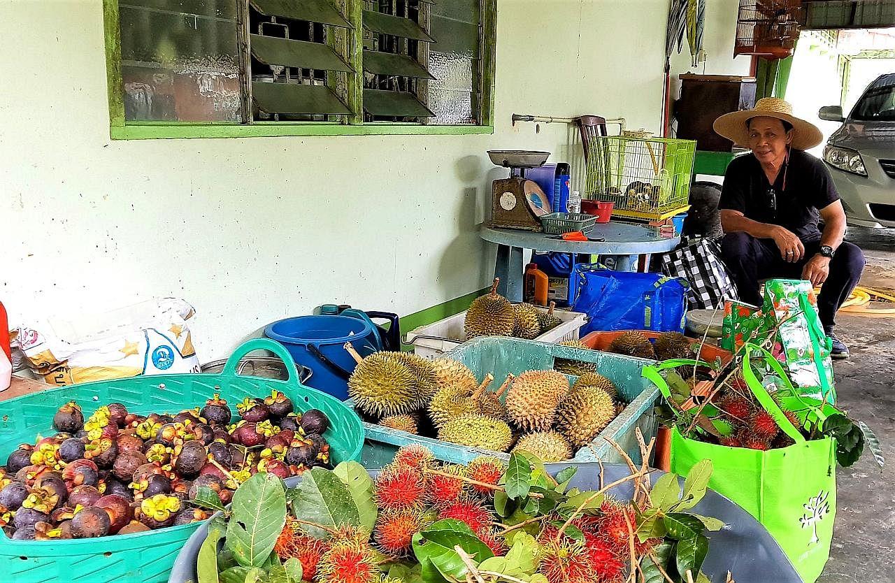KEMBARA Seronok tuai buah di kebun rakan di Muar