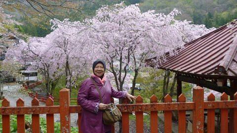 Kirimkan pengalaman melancong anda Indahnya kembang Sakura kota Matsumoto