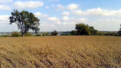 Iowa bandar kecil 'syurga' dunia sastera