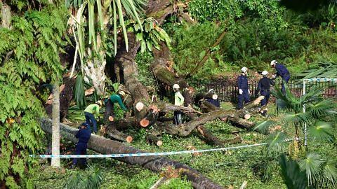 Pokok tembusu tumbang di Kebun Bunga, 5 cedera
