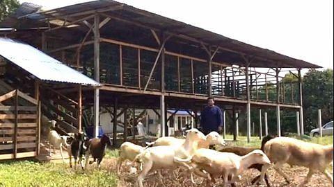 Anak Singapura buka ladang kambing di Johor selepas raih ilmu gembala