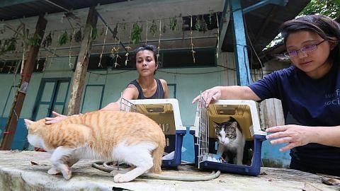 Peluang sertai operasi kawal pembiakan kucing terbiar