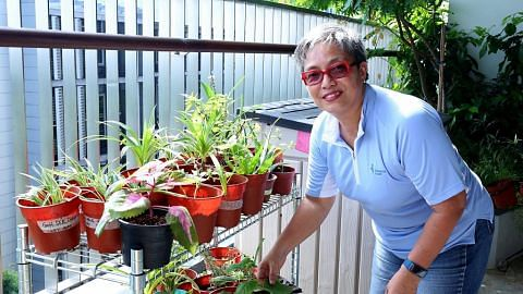 Aktifkan minda pesakit demensia melalui kegiatan berkebun