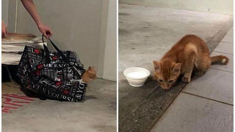 SPCA offering $1,000 reward for information on kitten left sealed in zipped bag in Taman Jurong