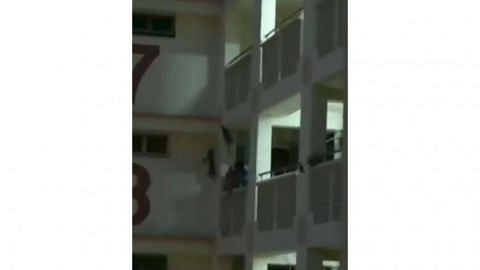 Cat falls 11 storeys and dies after rescue attempt goes wrong