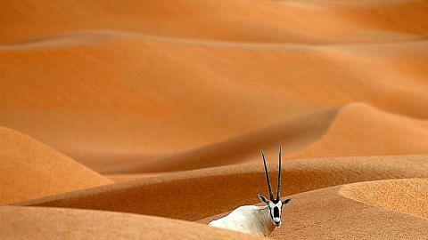Oman giat tarik pelancongan