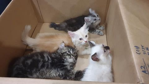 Man caught with 4 live kittens stuffed down his pants at Tuas Checkpoint