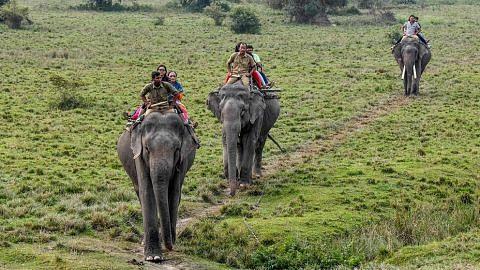"""Kegiatan berjinak dengan gajah """"tidak diterima"""""""