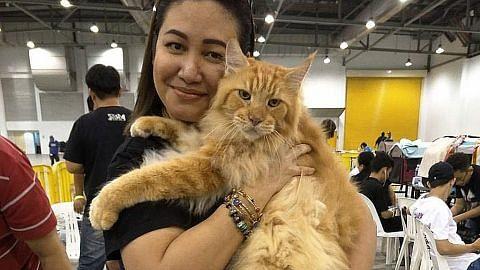 Belanja ribuan $$ untuk kucing
