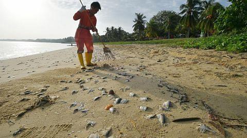 NParks siasat punca ratusan bangkai ikan di Pasir Ris Park