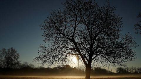 Pohon Agami Menara Cermin