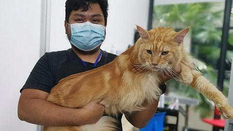 KEMBALI BEROPERASI Kucing pun nak 'gunting' rambut