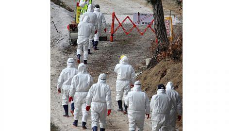 Korea Selatan henti semua operasi ternakan ayam itik kekang selesema burung