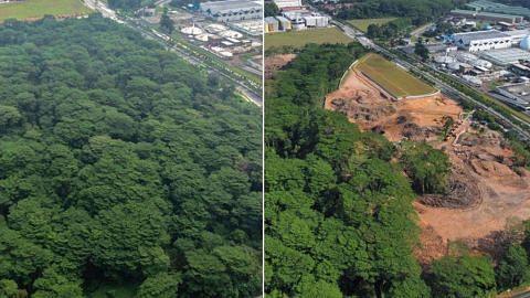 BERITA Sebahagian kawasan hutan Kranji tersilap dibersihkan