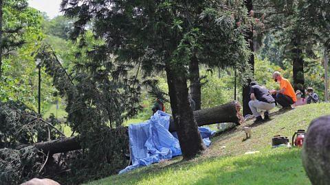 Program urus pokok NParks bantu kurangi insiden pokok tumbang