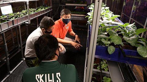 NTUC LearningHub lancar program latihan agroteknologi