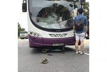 Penunggang e-skuter maut dalam nahas dengan bas SBS Transit