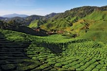Cameron Highlands safe to visit, Malaysian police say after reports of protests against crackdown on illegal farms