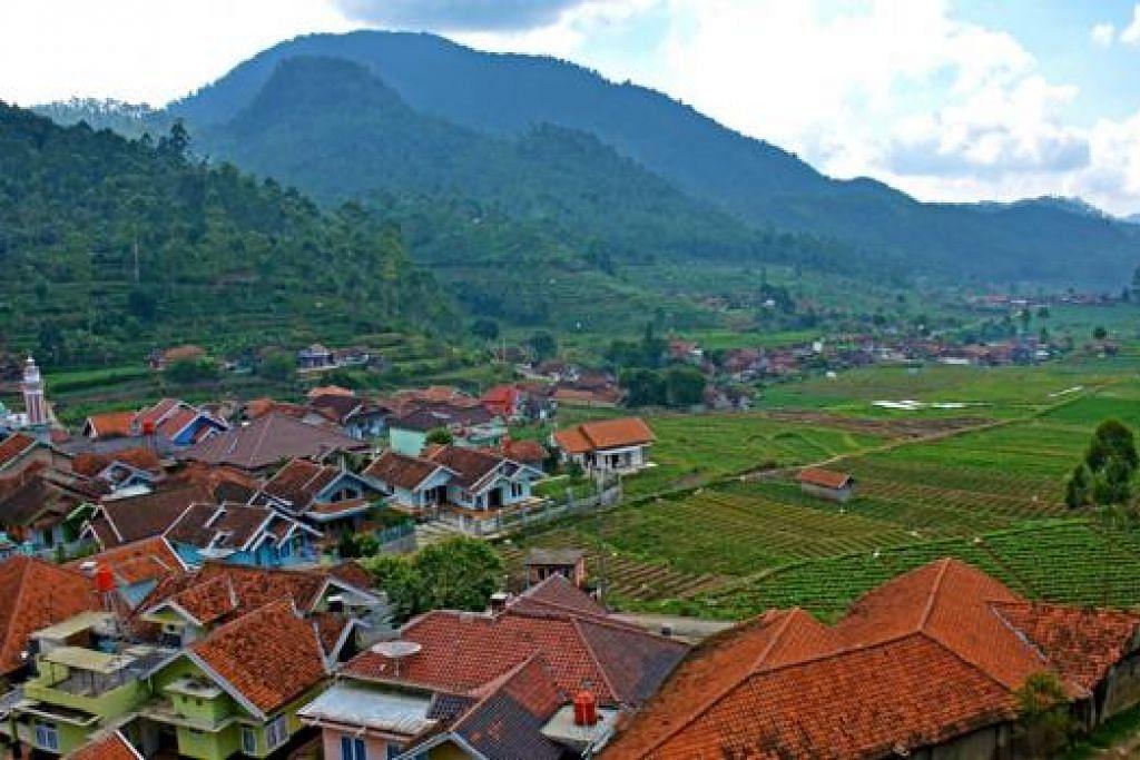 SEJUK MATA MEMANDANG: Ladang teh dan rumah-rumah kampung di luar kota Bandung. - Foto-foto ZAKI ZULFAKAR NOORDIN