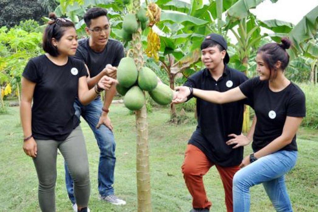 HASIL KEBUN: Keempat-empat anak muda ini membelek-belek buah betik yang tumbuh subur di kebun Bollywood Veggies itu.