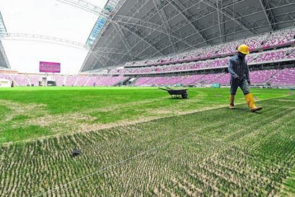 ISU BERTERUSAN: Padang hibrid yang menggabungkan rumput jenis rye dan blue grass dengan rumput sintetik tidak tumbuh subur. - Foto fail The Straits Times