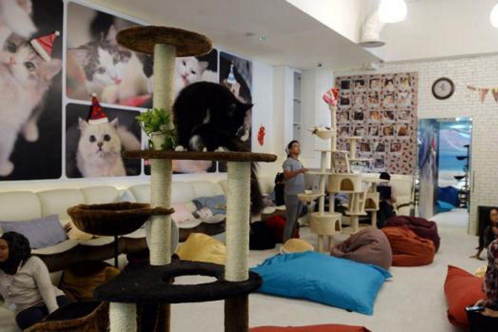 UNTUK DIJUAL: Pemilik kafe kucing Cuddles Cat Cafe yang menghadapi pelbagai dakwaan baru-baru ini kini menawarkan untuk menjual perniagaan itu kepada pihak yang berminat. - Foto fail TAUFIK A.KADER