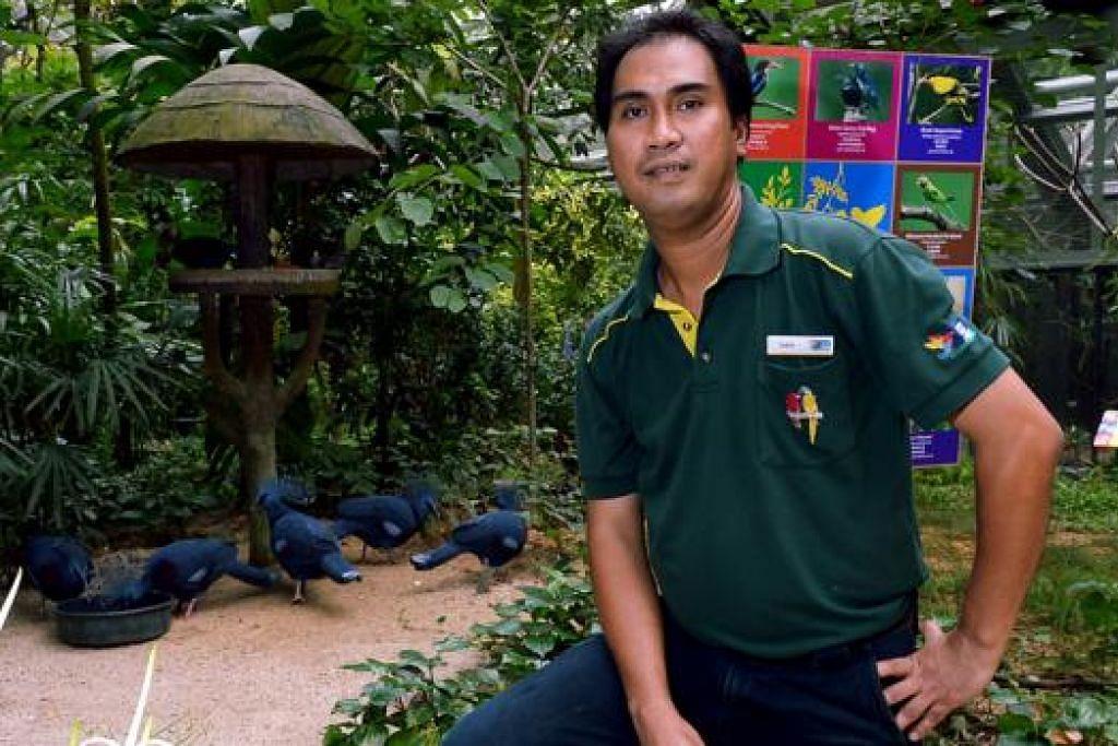 PENJAGA BURUNG: Penjaga kanan burung, Encik Sadali Mohamed Tali, yang telah bekerja selama 14 tahun di Taman Burung Jurong kini menjaga burung eksotik dan terancam di satu tarikan baru, Wings of Asia.  - Foto TUKIMAN WARJI