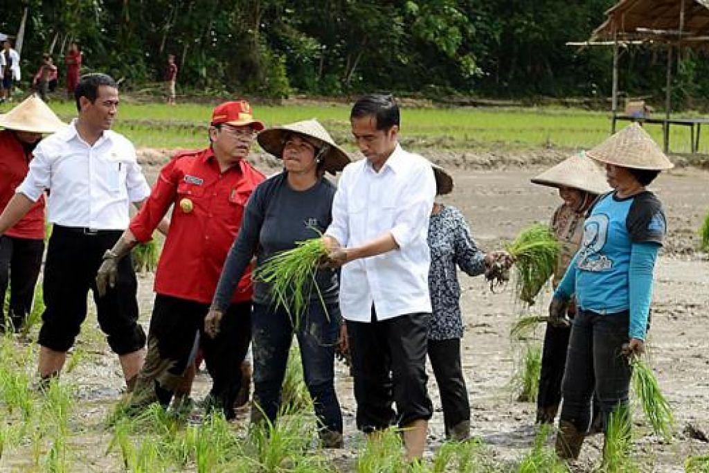 SEDERHANA TAPI MENYENGAT: Banyak dicapai Presiden ketujuh Indonesia, Encik Joko Widodo, dalam tempoh tiga bulan berbanding para pendahulunya, menurut para pengamat, di sebalik sosok peribadinya yang amat sederhana. Dalam gambar yang diambil 20 Januari lalu ini, beliau (empat dari kanan) kelihatan membantu penduduk kampung Ngara, di Kalimantan Barat, menanam padi. - Foto AFP