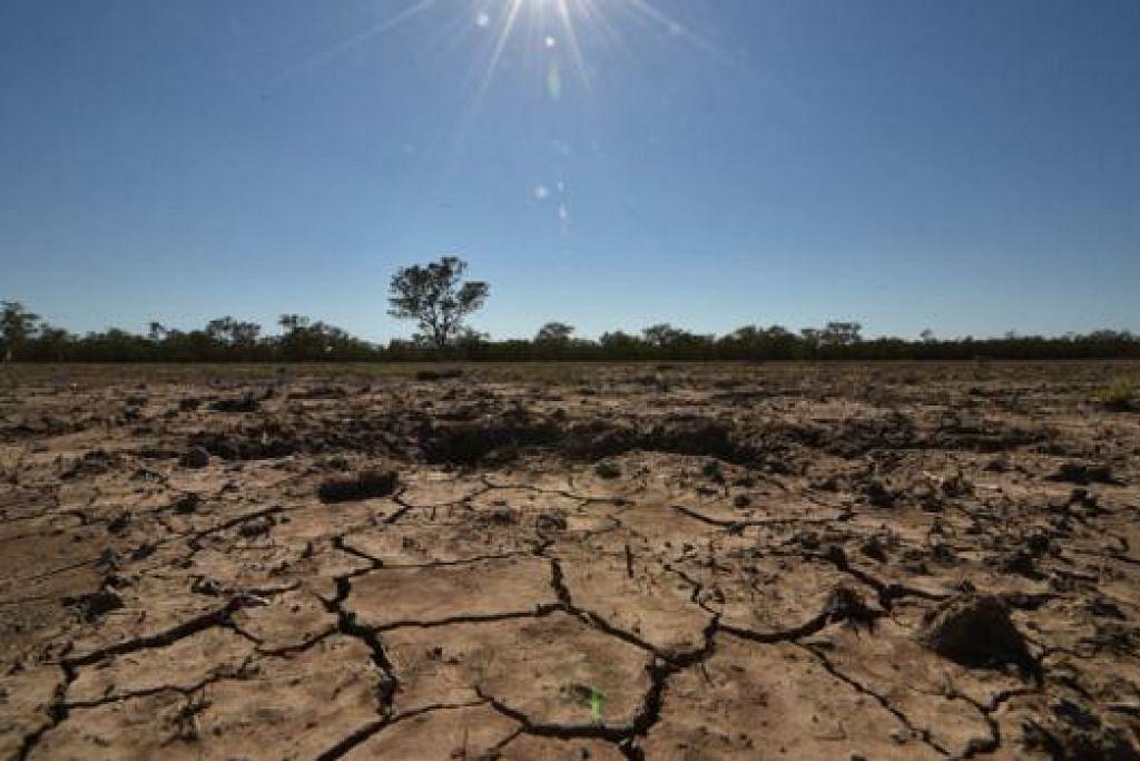 SUKAR BERTAHAN: Petani berpengalaman di bandar pertanian Walgett, Australia, yang terjejas oleh kemarau panjang mungkin terpaksa melepaskan perniagaan mereka jika tiada hujan. - Foto AFP