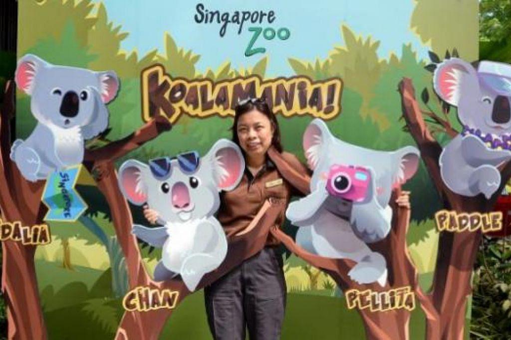 TERAPKAN ILMU YANG DIRAIH: Cik Rubiah telah menjalani latihan bagi mempelajari tentang penjagaan koala di Cagar Alam Koala Lone Pine di Brisbane bersama dua lagi penjaga haiwan dan kini menjaga empat koala yang bakal dipamerkan di Taman Haiwan Singapura pada 20 Mei ini. - Foto JOHARI RAHMAT