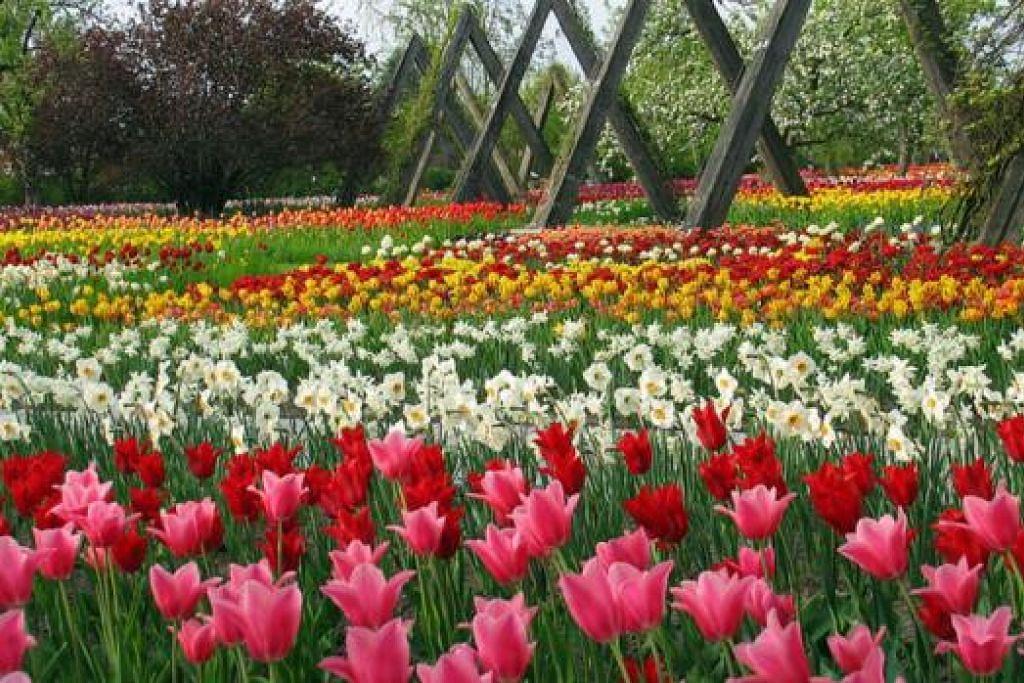 SYURGA BUNGA BERLIN: Kota Berlin yang indah dengan bunga berwarna-warni lagi harum mewangi adalah idaman Cik Hamidah Abdul Karim untuk dikunjungi kerana kerap kali ada sesi bengkel belajar daripada pakar bunga (masterclass) yang mampu menambah pengetahuannya. - Foto LAMAN FLOWER FESTIVAL