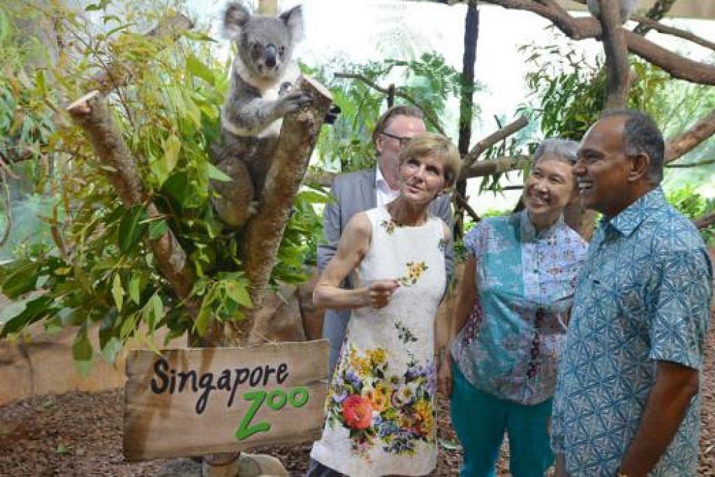 HADIAH SG50: (Dari kiri) Pesuruhjaya Tinggi Australia, Encik Philip Green; Menteri Hal Ehwal Luar Negeri Australia, Cik Julie Bishop; Ketua Pegawai Eksekutif Temasek Holdings, Cik Ho Ching; dan Menteri Hal Ehwal Luar, Encik K.Shanmugam; berinteraksi dengan koala dalam kandang tertutup dalam majlis pembukaan rasmi pameran koala di Taman Haiwan Singapura. - Foto SINGAPORE PRESS HOLDINGS