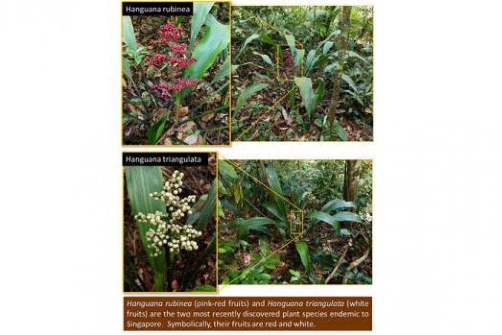 SPESIES BARU: Encik Khaw berkongsi tentang dua spesies tanaman baru yang hanya didapati di Singapura menerusi blognya. – Foto BLOG HOUSING MATTERS