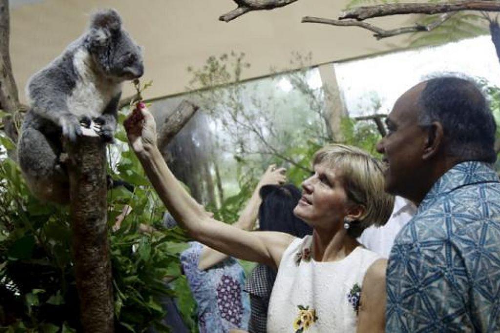 Sempena sambutan ulang tahun ke-50 hubungan diplomatik, Australia awal tahun ini meminjamkan empat beruang koala kepada Singapura