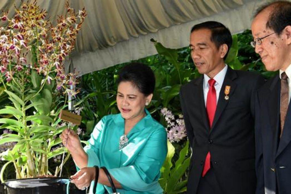 HADIAH ISTIMEWA: Presiden Joko Widodo memerhatikan isterinya, Cik Iriana Widodo, membubuh nama pada bunga anggerik yang dinamakan sempena nama beliau, Dendrobium Iriana Jokowi, di Taman Anggerik Negara, semalam. - Foto AFP
