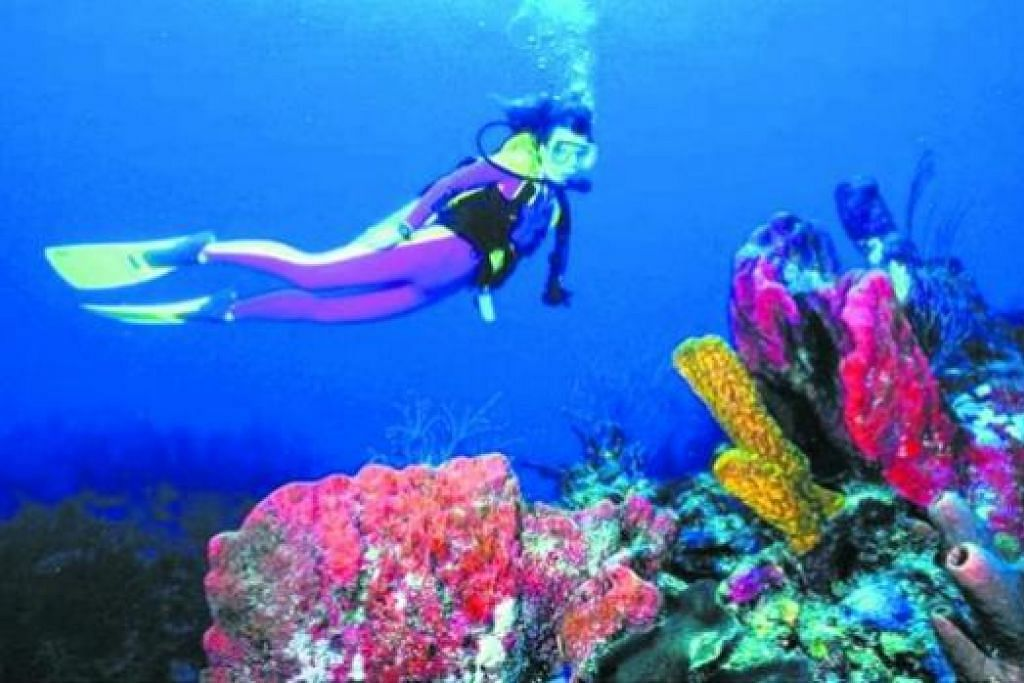 HIDUPAN LAUT MEKAR: Lihat sendiri kecantikan terumbu karang di Bunaken, Manado, Sulawesi Utara, Indonesia. - Foto KEDUTAAN INDONESIA