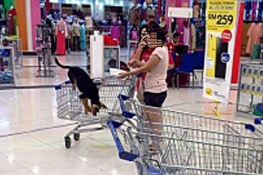CETUS KONTROVERSI: Perbuatan dua wanita ini membawa masuk anjing ke sebuah pasar raya di Plentong mencetus tengkarah. - Foto UTUSAN MALAYSIA