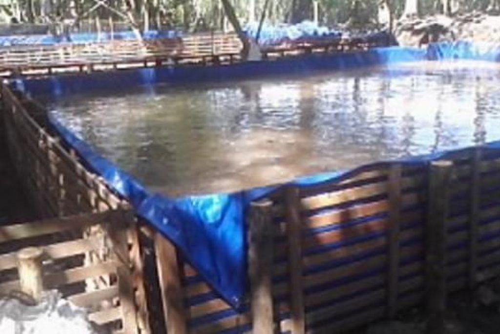 MEREALISASIKAN IMPIAN: Inilah rupa ladang ikan milik pembantu rumah Cik Warih di Jawa Timur. Antara ikan yang diternaknya termasuk ikan lele dan gurame.