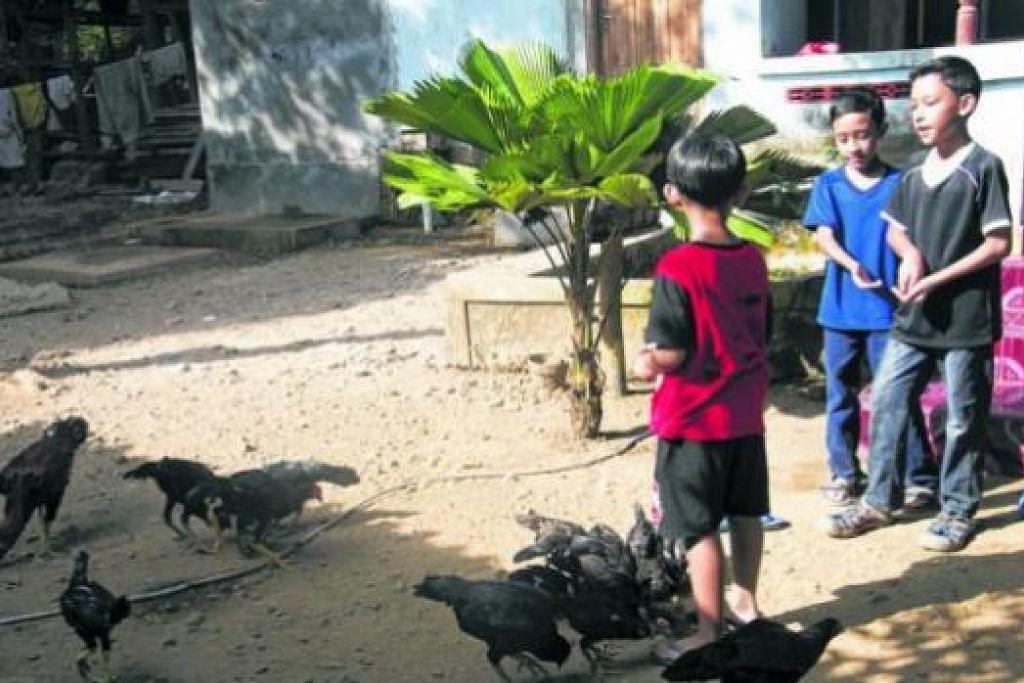GEMBIRANYA LIHAT AYAM: Firman Hadi (berbaju hitam) dan adiknya, Fikri Hakim (berbaju biru), bersama saudara mereka di kampung Kebondalem Pacitan, Jawa Timur, Indonesia, seronok bermain dengan ayam kampung.