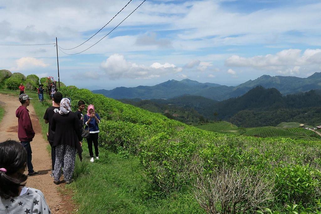 JAUH PERJALANAN, LUAS PEMANDANGAN: Inilah pemandangan yang menyambut pengunjung ke Malino Highlands. Antara lain, pengusaha menanam teh buat penjualan di sana atau dieksport. – Foto-foto NURUL AIN RAZALI