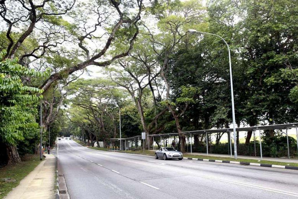 Kehijauan memagari Upper Aljunied Road, dilihat di sini dari Upper Serangoon Road. Bahagian yang akan dijadikan laluan pejalan kaki, dengan rimbunan pokok-pokok matang, amat sesuai dengan pelan tindakan subur bagi estet Bidadari baru.