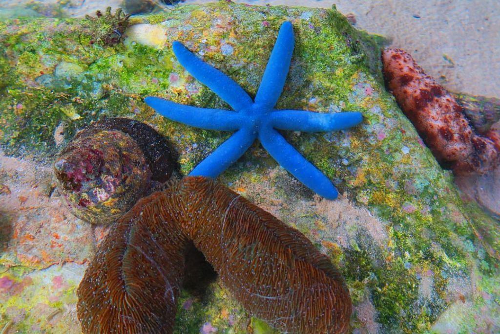 Pengunjung ke Gayana Eco Resort boleh melawati Pusat Penyelidikan Ekologi Marin (Merc) yang berusaha memelihara kehidupan laut di kawasan itu.