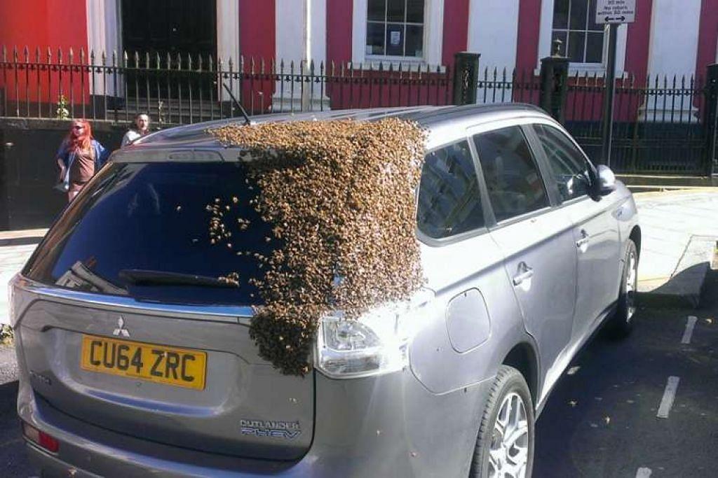 Lebah menyerang kereta Cik Carol Howarth di Wales.