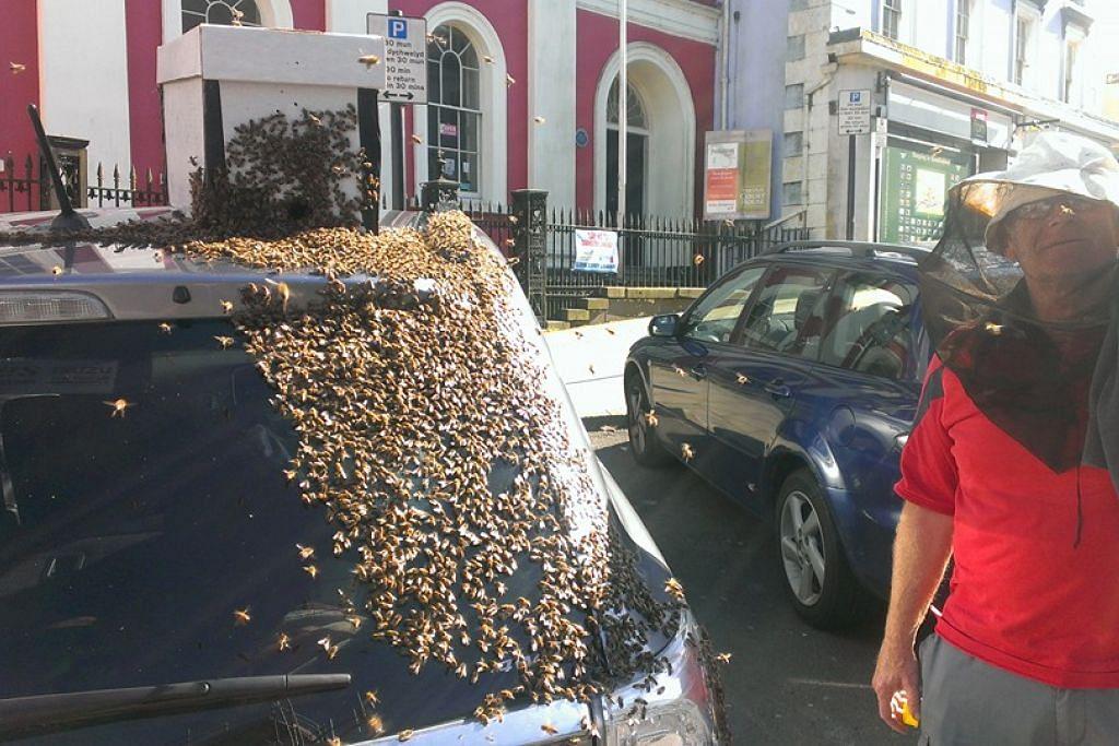 Seorang pemelihara lebah cuba menghalau seranga itu daripada kereta Cik Howarth.