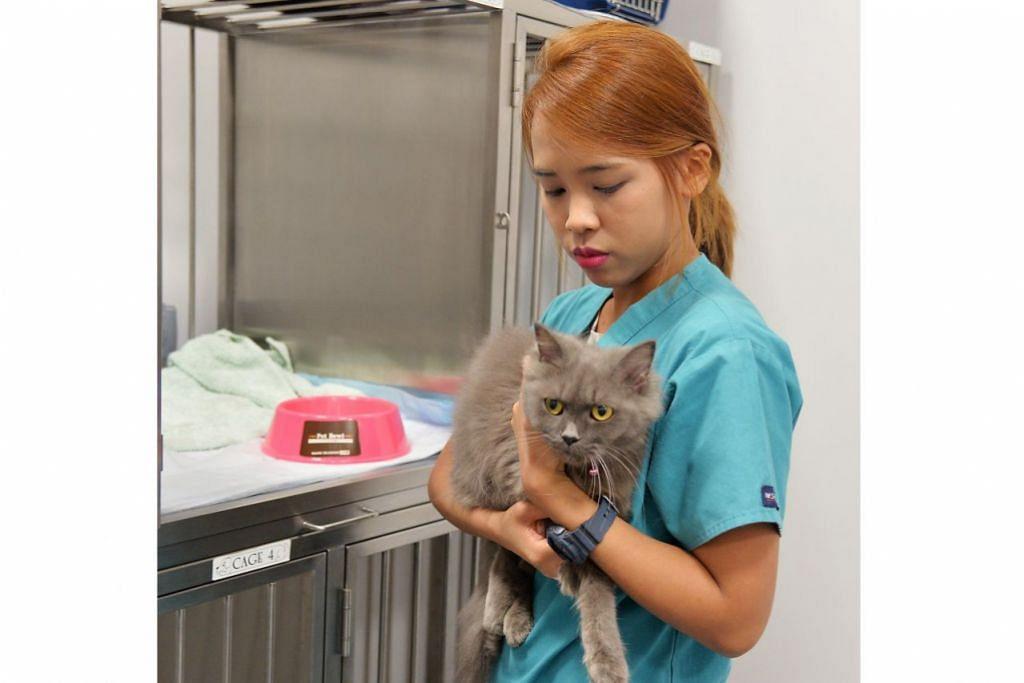 KURSUS RAWATAN HAIWAN TIMBULKAN IHSAN: Cik Syahidah Azmi yang mempunyai 14 kucing peliharaan menyedari bahawa terdapat seribu satu jenis penyakit yang boleh diderita haiwan peliharaan meskipun mereka kelihatan sihat dan berselera makan. - Foto IMAN ALIF