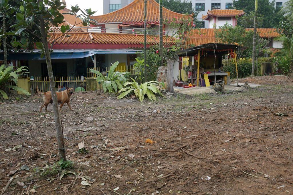 Kawasan tumbuh-tumbuhan di belakang Kuil Bergabung See Thian Foh di Bukit Batok Street 23 dibersihkan April lalu sebagai sebahagian daripada operasi meluas untuk memerangi tikus di kawasan itu.