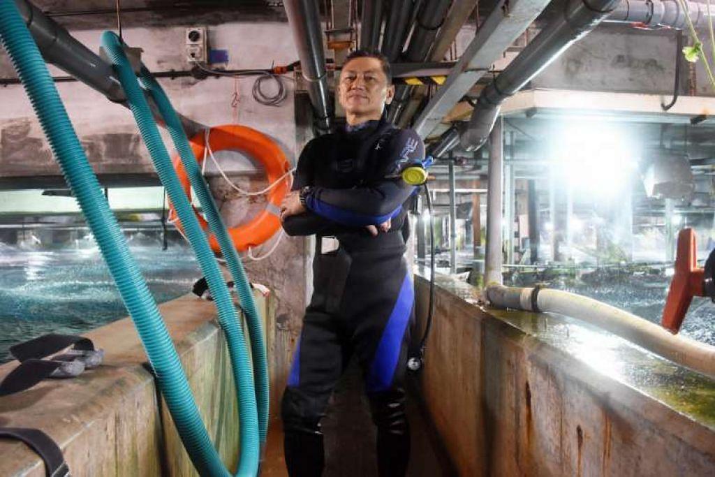 Encik Philip Chan sudah bekerja di Underwater World Singapore selama 25 tahun.