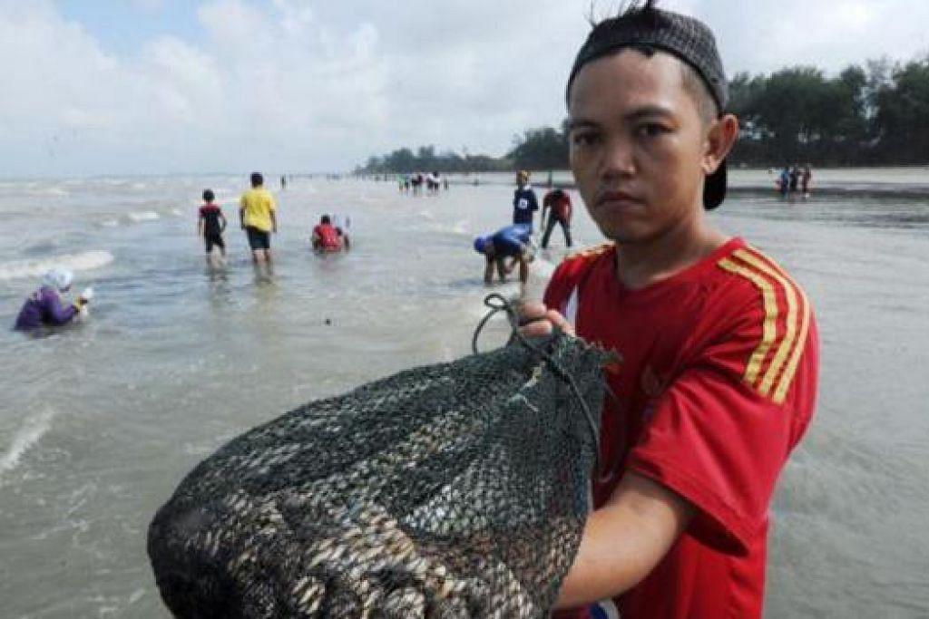 BAK DURIAN RUNTUH: Ribuan kerang terdampar di Terengganu menjadi durian runtuh kepada penduduk berdekatan. - Foto MSTAR